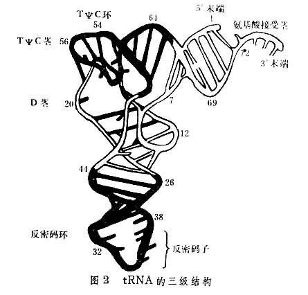 trna三级结构由保守或半保守成分与构成二级结构的核