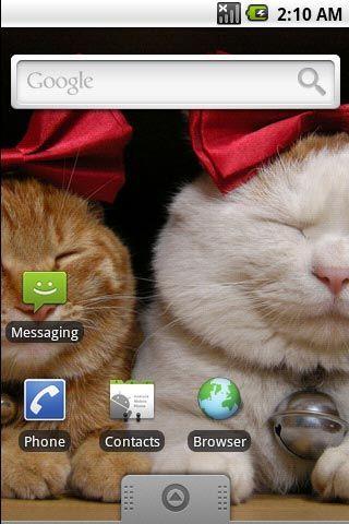 超可爱小猫咪第五辑主题壁纸